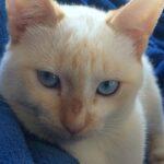 John-John o gatinho