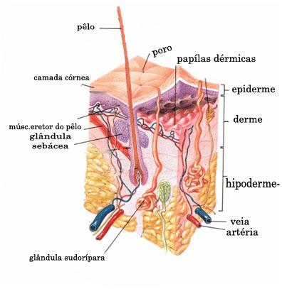 Imagem: https://pt.wikipedia.org