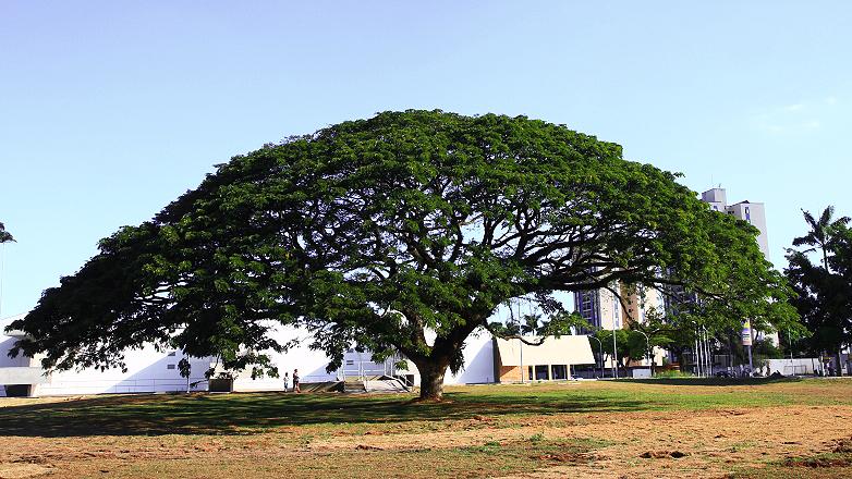 Foto: Portal Prefeitura de São José dos Campos